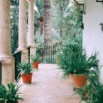 De palmboom en haar geheimen